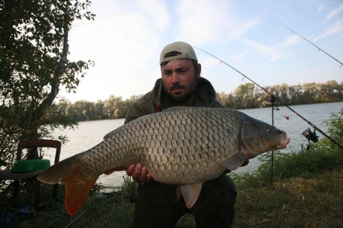 сазан москва река рыбалка